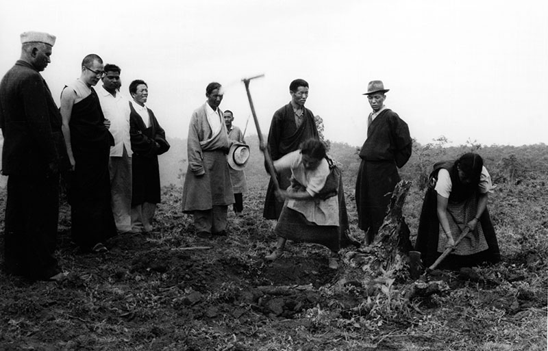 His Holiness the Dalai Lama watches women clearing-up tree roots for agricultural purposes in one of the Tibetan settlements in South India, 1960's
