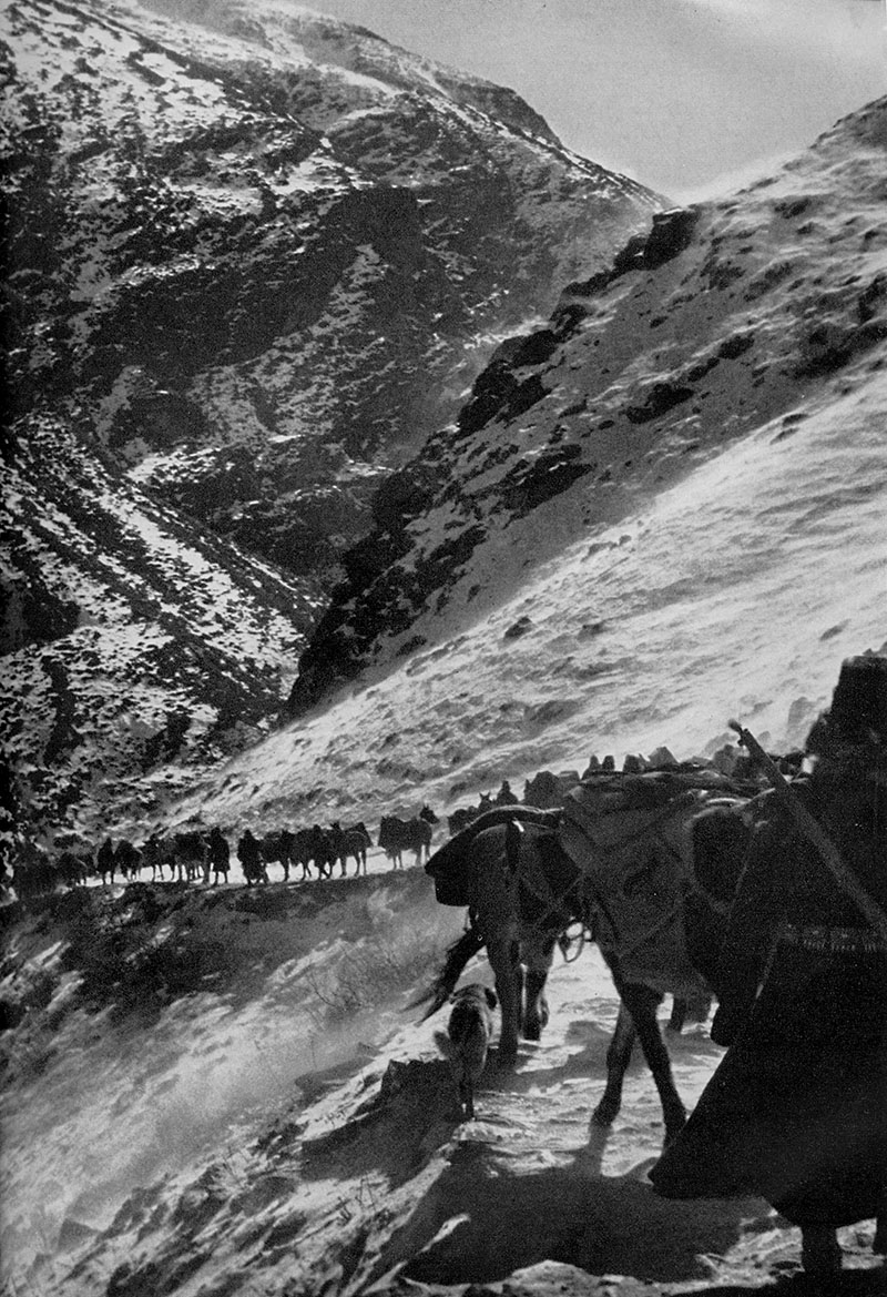 His Holiness the Dalai Lama' entourage and caravan during his escape to Dromo (Yatung) from Lhasa, following Chinese invasion threat, 1950